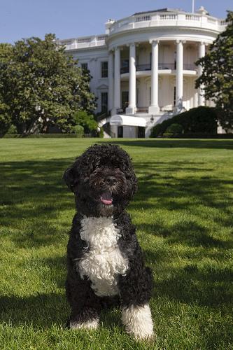 bo_obama_foto-oficial