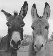 burros01