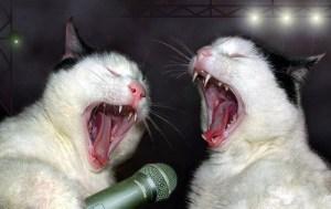 gatoscantores